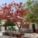 Sor Juana Inés de la Cruz ikas-komunitatea (Mexiko) Boluntariotza eta hezkuntzarekiko pasioa